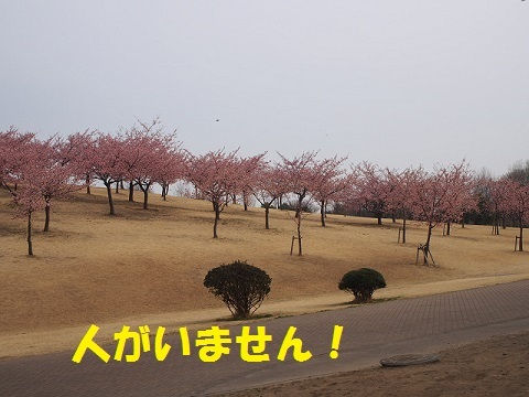 P3060351.jpg