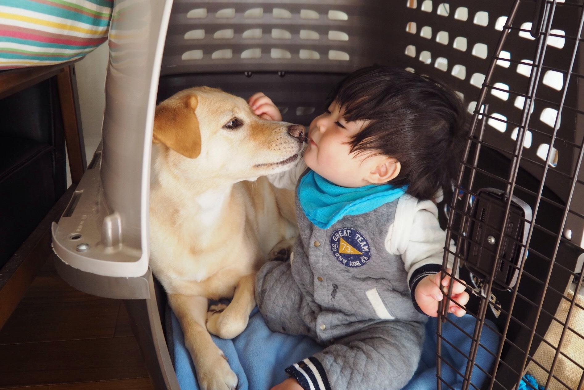 赤ちゃんと犬 赤ちゃんと大型犬 ナニードッグ