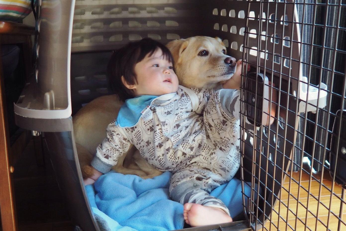 赤ちゃんと犬 赤ちゃんと大型犬