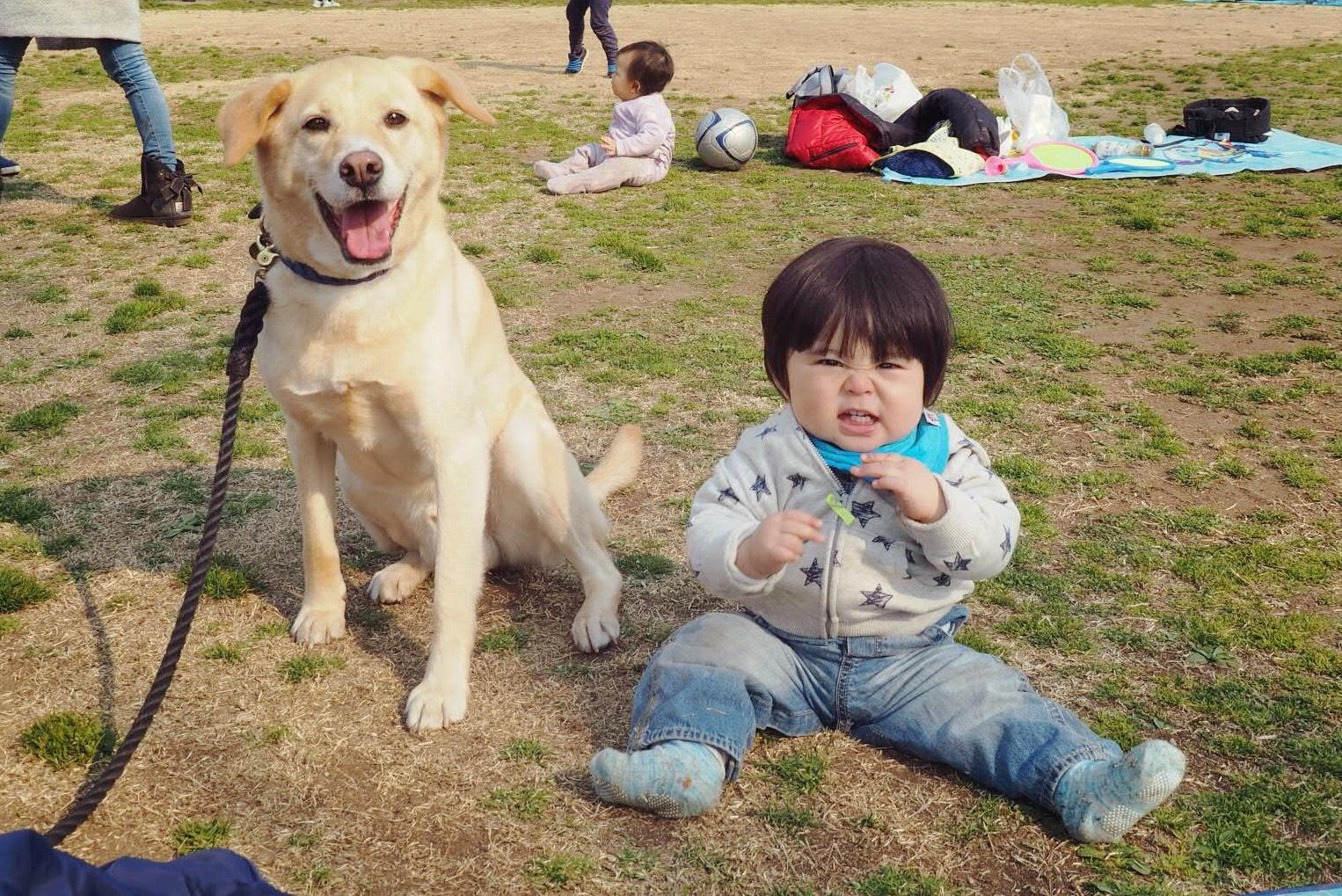 赤ちゃんと犬 大型犬と赤ちゃん ラブラドール