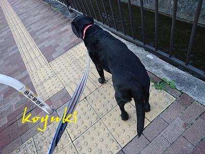 20170402koyuki1.jpg
