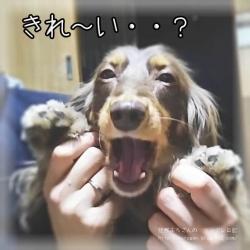 きれ~い・・?