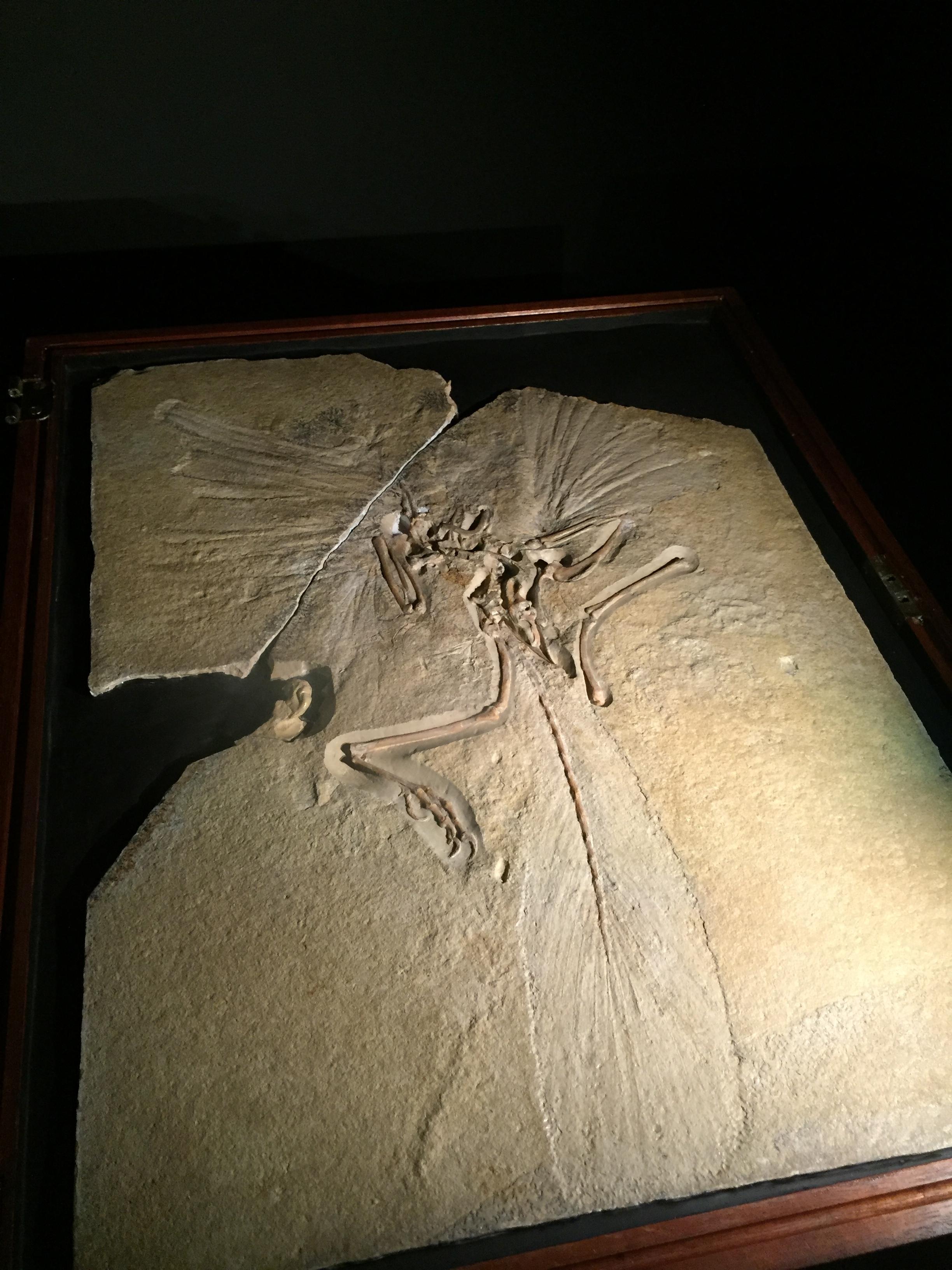 アルケオプテリクス