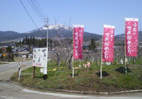 のぼり旗設置完了(29.4.13)