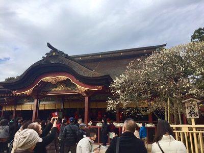 本殿と梅の木