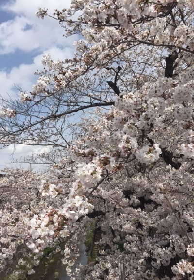 青空と桜2017年