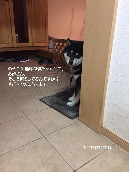 まるちゃん2017032306