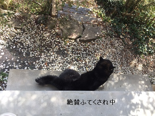 まるちゃん2017032707