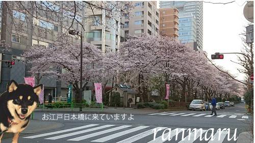 まるちゃん2017040101