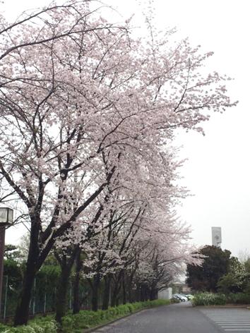 IMG_7034桜
