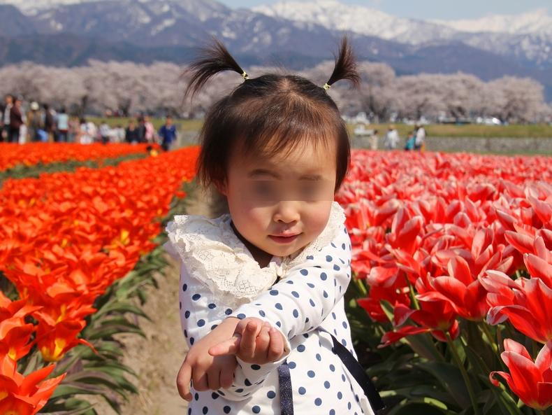 春のチューリップ畑にて(朝日町舟川べり)