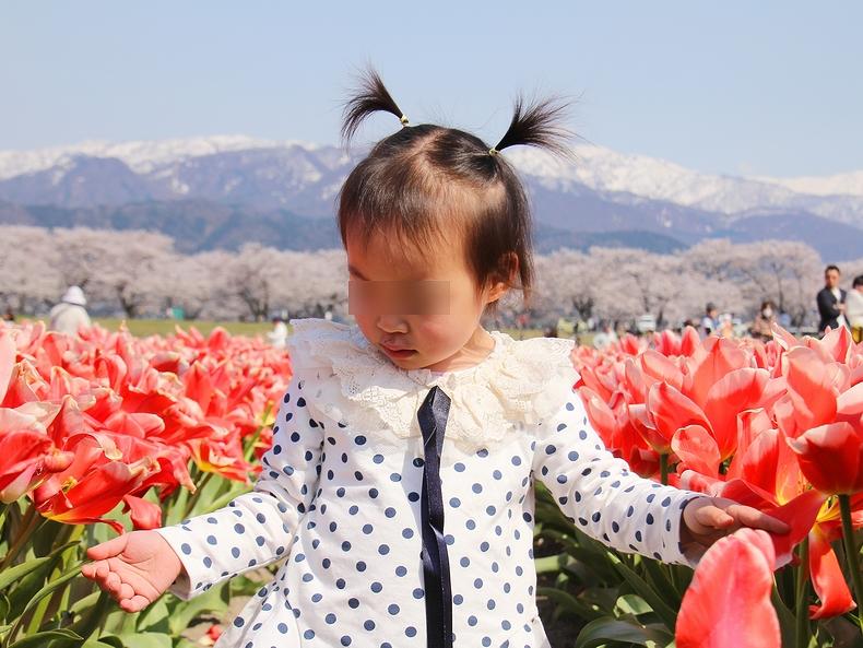 チューリップ畑で楽しむ娘(富山県朝日町にて)