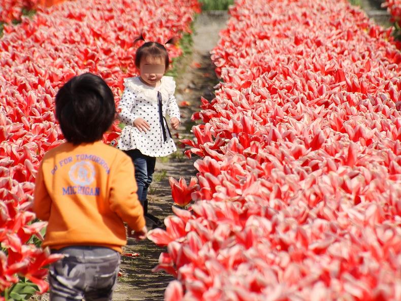 チューリップ畑で楽しむ子供たち