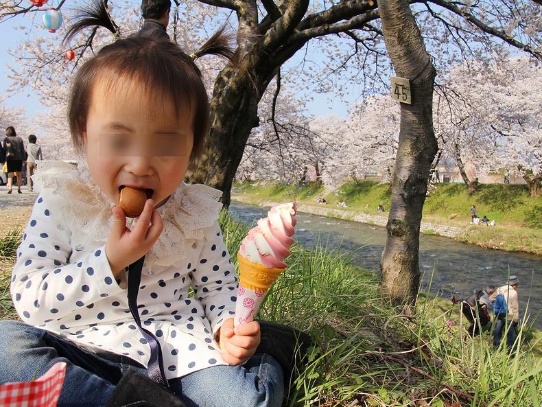花より団子!?桜の下でカステラをほおばる