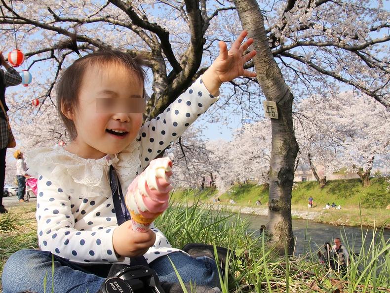 ソフトクリーム片手にお花見(富山県朝日町の舟川べりにて)