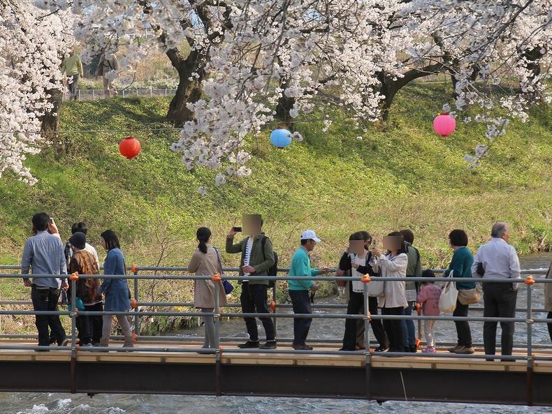 花見客で賑わう舟川(富山県朝日町)