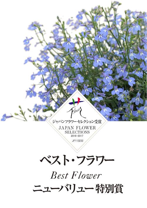 ロベリア_空色てふてふ 青空ブルー1
