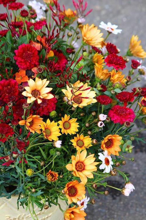 中西さん モナガーデン 寄せ植え ギャザリング オステオスペルマム パティエ マーガレット 松原園芸