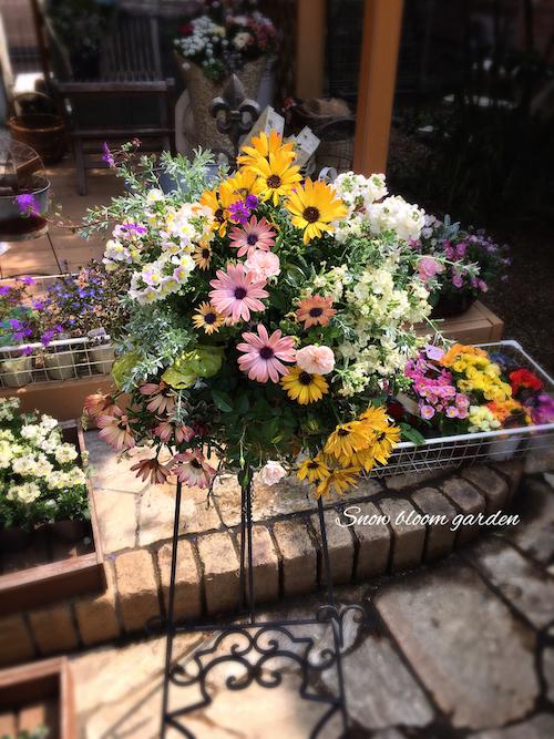 Snow bloom garden オステオスペルマム パティエ 寄せ植え 松原園芸