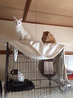 ももよ嬢を囲む猫たち