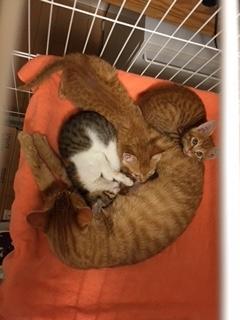 茶色ママと子猫ケージ上から(大谷君入り)