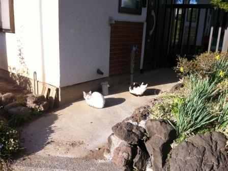 猫スポット