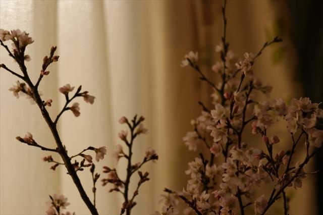 啓翁桜-4