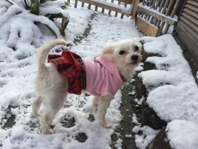 初雪遊び!