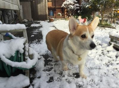 雪!でしゅよ!