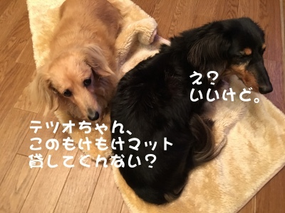 写真2352(№414)1