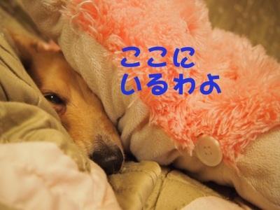 写真2366(№415)1