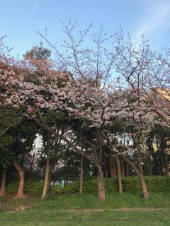 本城東公園1