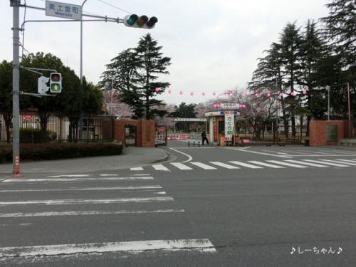 熊谷基地さくら祭_01
