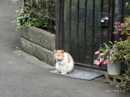横浜中華街_06