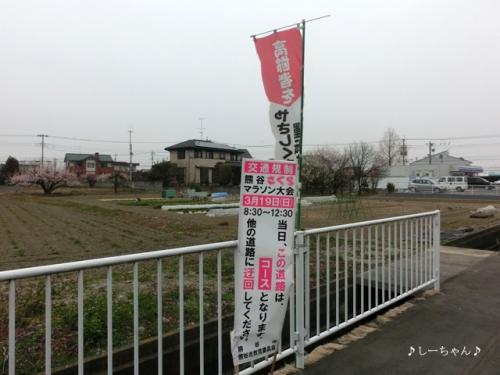 さくらマラソン2017_01
