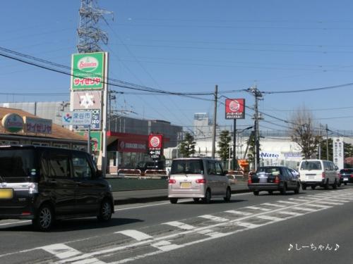 Nitto前の河津桜_01