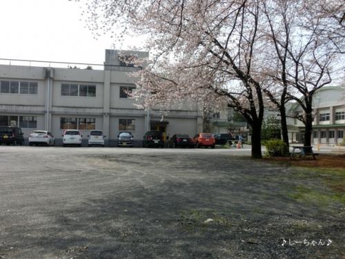 籠原界隈の桜_02