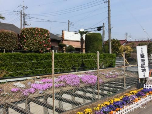 籠原界隈の桜_05