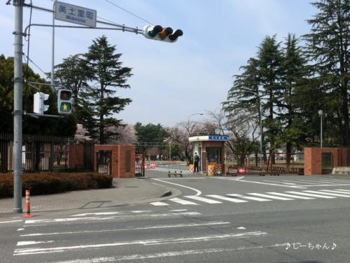 籠原界隈の桜_06