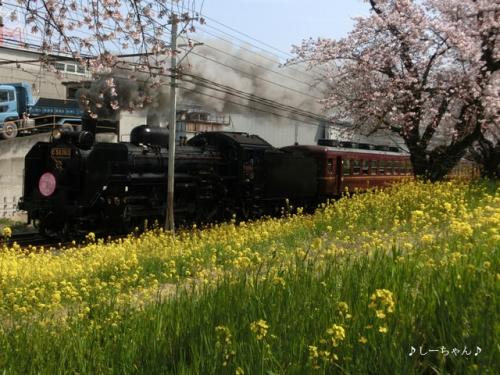 荒川土手の桜・2017_03