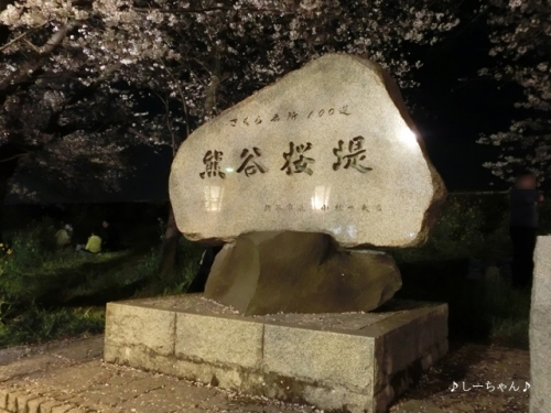 荒川土手の桜・2017_10