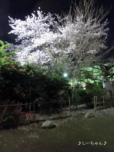 荒川公園の桜_04
