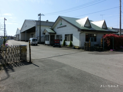 JA士幌町 熊谷事務所の八重桜_01