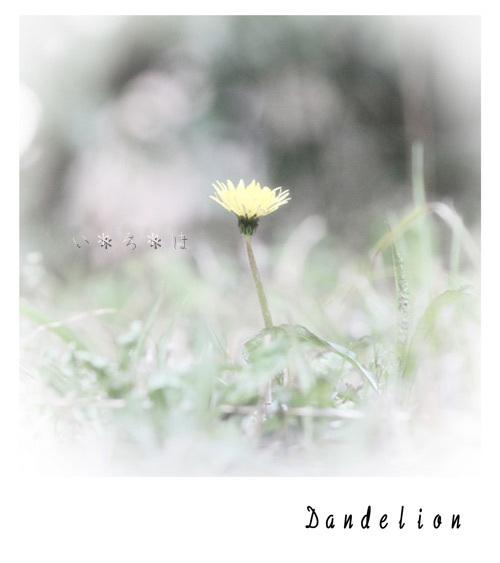 ダンデライオン1017