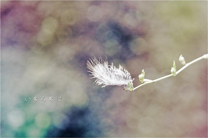 天使_5943s