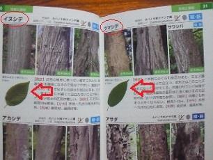 NEC_0659-2_20170416214629396.jpg