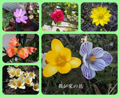 我が家の花ー1