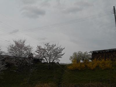 DSCN4408.jpg