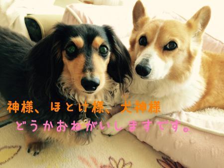 043_convert_20170406131311.jpg