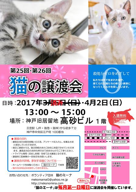 猫の譲渡会5月